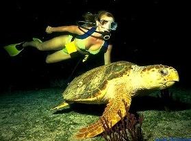 La plongée de nuit vous permet de découvrir une nouvelle vie